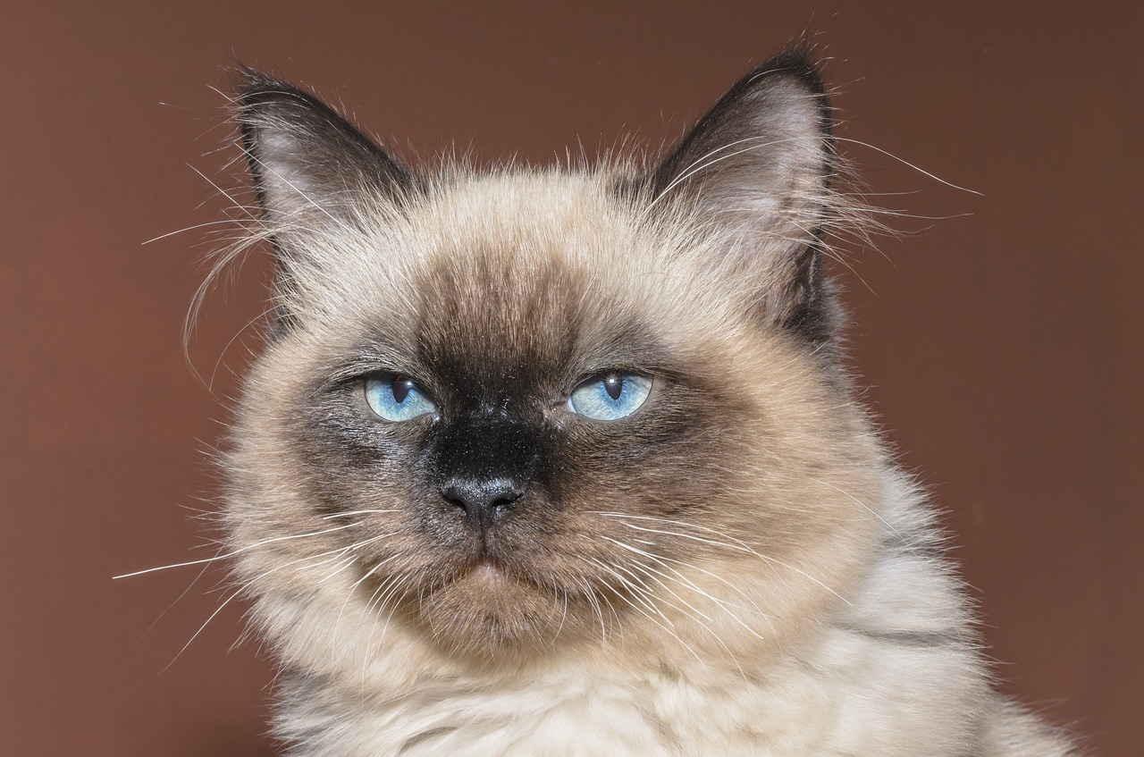 Кошка, Котенок, Домашние Животные, Кот, Животное