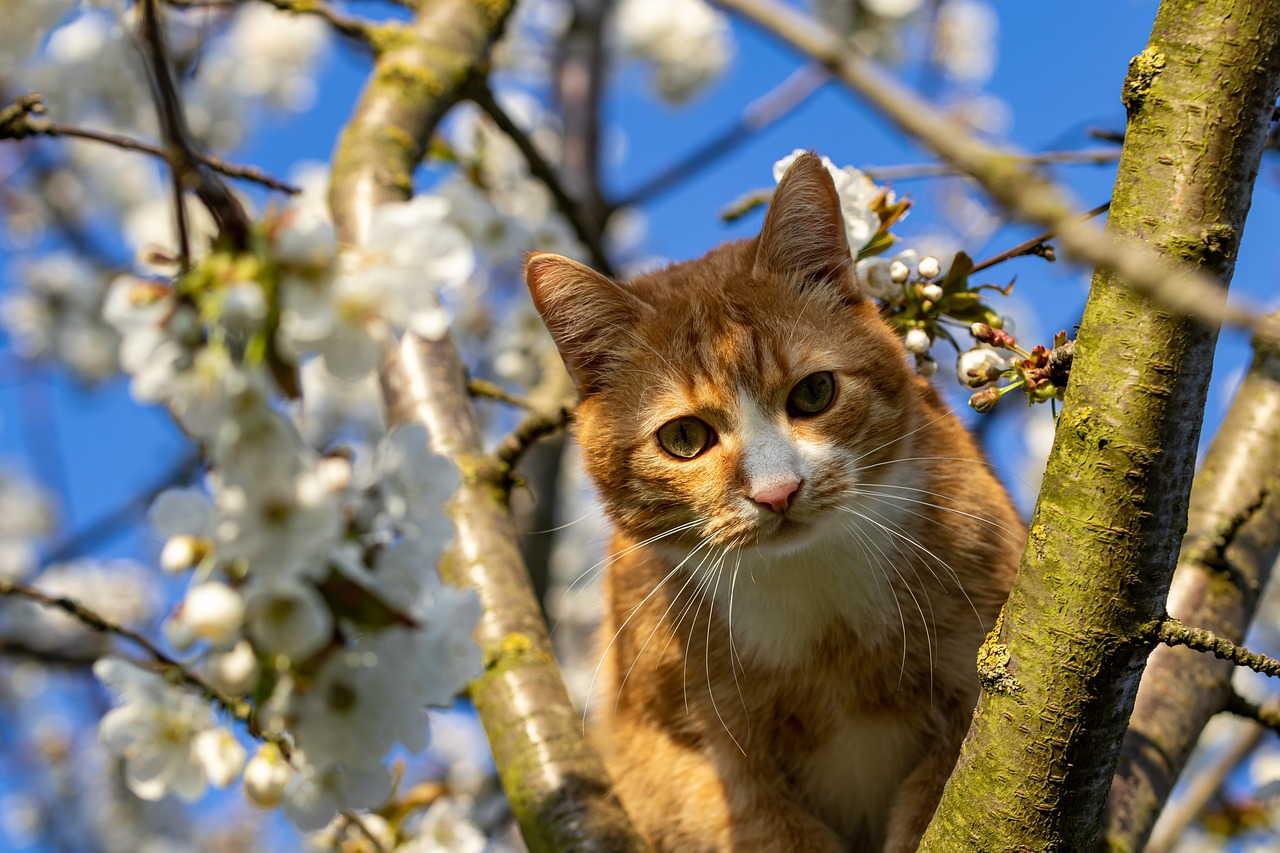 Подготовительный период перед вязкой и вязка кошки